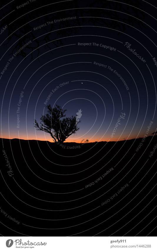 Der Tag geht zu Ende Natur Landschaft Himmel Wolkenloser Himmel Nachthimmel Sonnenaufgang Sonnenuntergang Mond Schönes Wetter Baum Wüste genießen