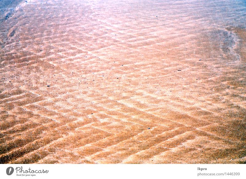 nasser Sandstrand in der Nähe von Atlantik Natur Ferien & Urlaub & Reisen schön Sommer Erholung Meer Einsamkeit Landschaft Strand gelb Küste Freiheit braun