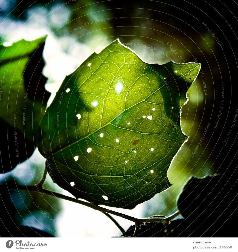 Beschädigt Blatt Natur Zweige u. Äste Park Baum Sommer pflanzlich Photosynthese grün Ast