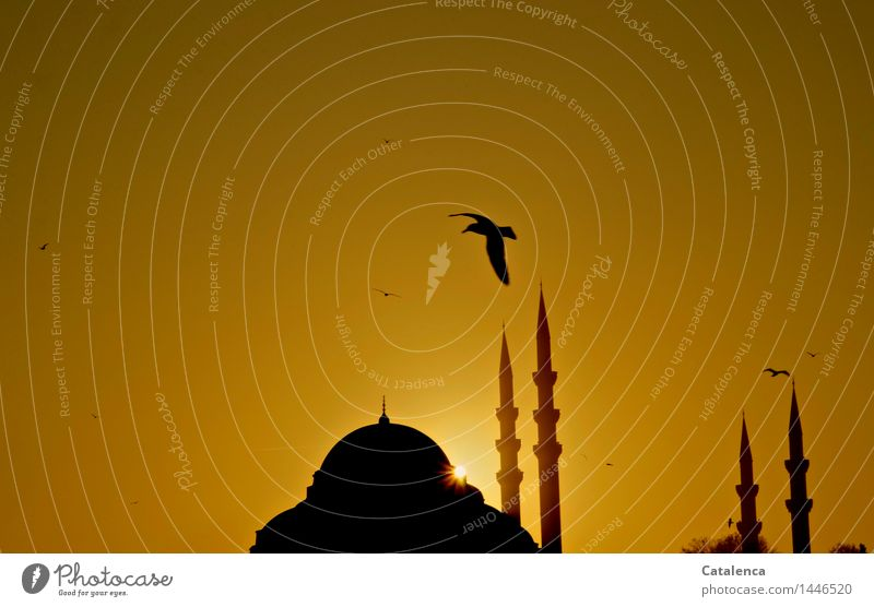 Möwe über Minarett Muezzin Wolkenloser Himmel Sonnenaufgang Sonnenuntergang Schönes Wetter Moschee Moscheekuppel Minarette Sehenswürdigkeit Wahrzeichen Denkmal
