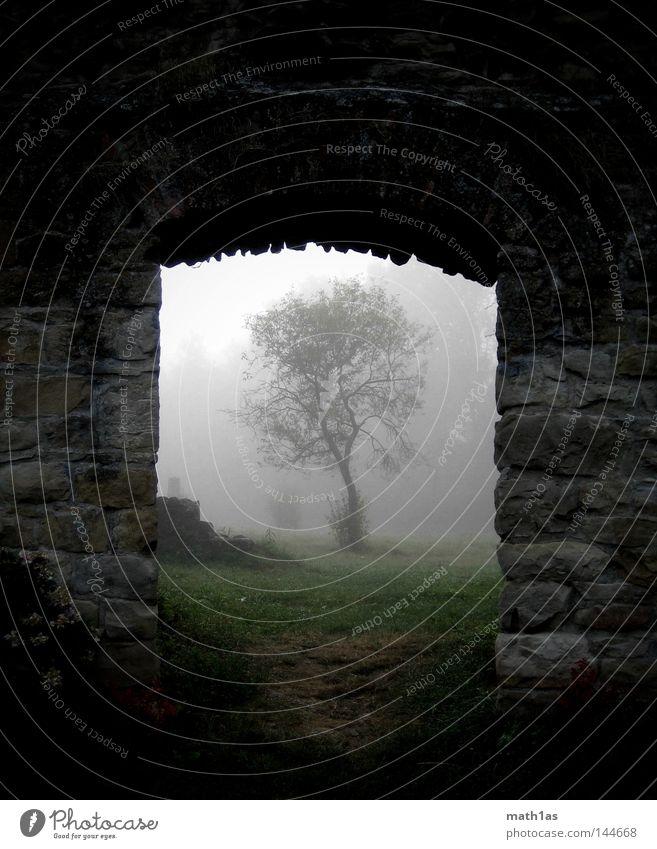 Tor zum Baum des Lebens Baum Stein Mauer Nebel Ruine Gotteshäuser Steinmauer