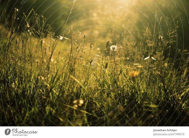 Wiese in Skassa Natur grün schön Blume Erholung ruhig Freude gelb Leben Gefühle Beleuchtung Gras träumen Freizeit & Hobby ästhetisch