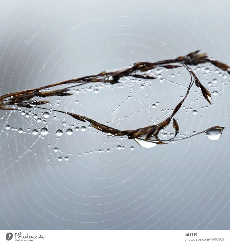 Tröpfchen Natur Pflanze Luft Wasser Himmel Herbst schlechtes Wetter Nebel Gras Gräser mit Tautropfen Garten Park Feld Moor Sumpf glänzend hängen leuchten