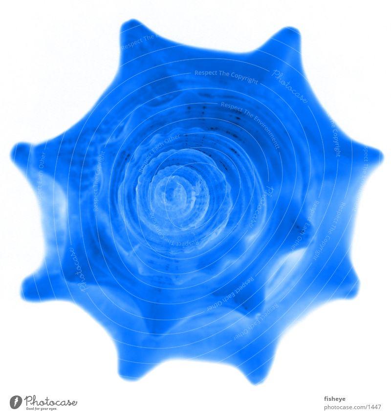 Muschel Spirale Meer blau