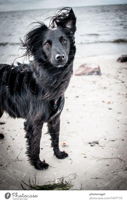 Am Meer Himmel Hund Natur Wasser Meer Landschaft Tier Strand schwarz Herbst Küste Glück träumen Zufriedenheit frisch Kraft