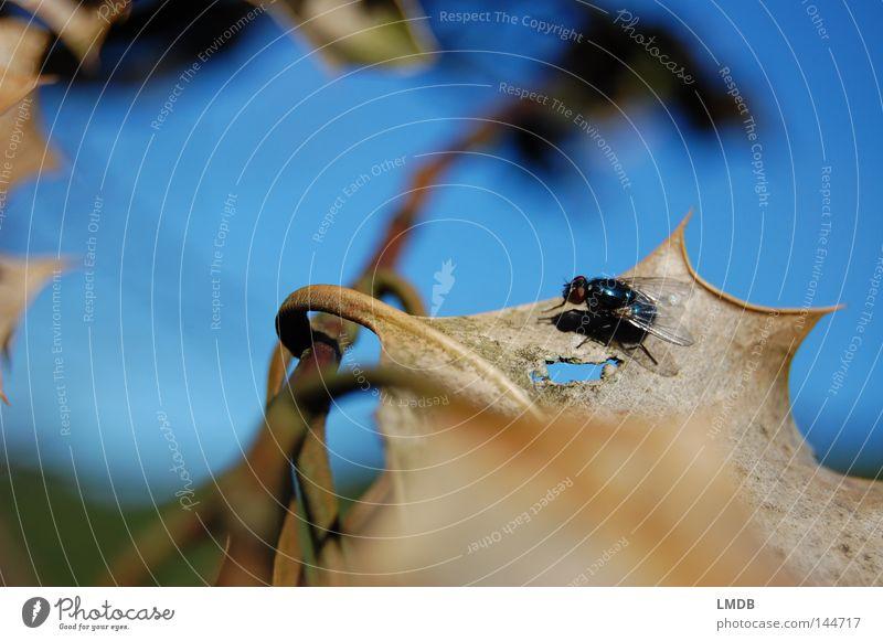 Stachelige Zwischenlandung Natur Himmel Baum blau Pflanze Blatt Tier Herbst Tod grau braun Fliege Aussicht Insekt Ast Spitze