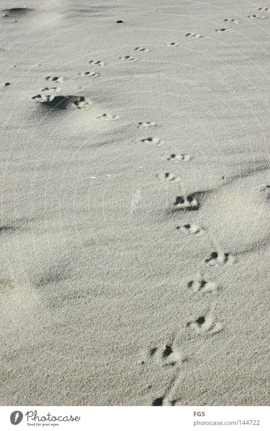 Fußstapfen Ferien & Urlaub & Reisen Strand kalt Sand See Fuß Erde Vogel Wetter Wind Suche Klarheit Spuren Leidenschaft genießen Möwe
