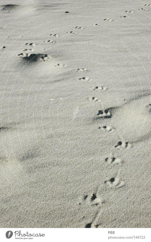 Fußstapfen Strand Möwe See Wind Futter Vogel kalt Leidenschaft Brise März Ferien & Urlaub & Reisen genießen Erde Sand Spuren Wetter Kurve Suche Klarheit