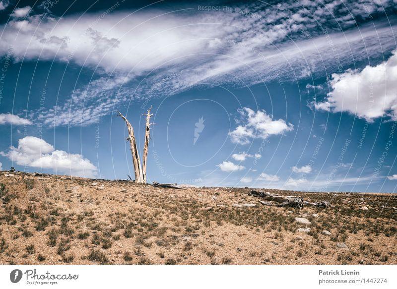 last tree standing Sinnesorgane Erholung ruhig Ferien & Urlaub & Reisen Ausflug Ferne Freiheit Expedition Umwelt Natur Landschaft Urelemente Luft Himmel Wolken