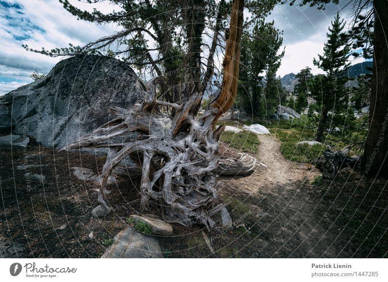 Baumwurzel Ferien & Urlaub & Reisen Ausflug Abenteuer Ferne Umwelt Natur Landschaft Urelemente Erde Sommer Klima Klimawandel Wetter Pflanze Wald Alpen