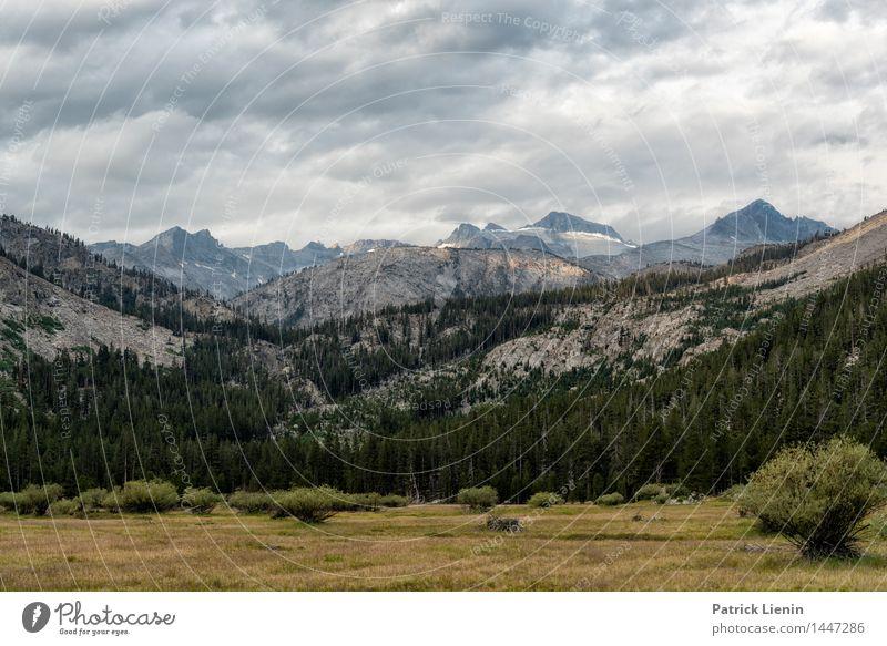 Lyell Canyon harmonisch Wohlgefühl Ferien & Urlaub & Reisen Tourismus Ausflug Abenteuer Freiheit Umwelt Natur Landschaft Urelemente Erde Himmel Wolken