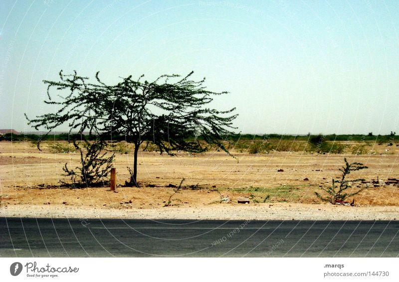 Road to Jaisalmer Baum Sommer Ferien & Urlaub & Reisen Straße Wärme Wüste trocken Indien Steppe