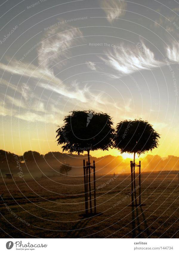 Herbstlich(t) Baum ruhig gelb Erholung träumen 2 Zusammensein Nebel paarweise Frieden Sehnsucht faulenzen Morgennebel Weißabgleich