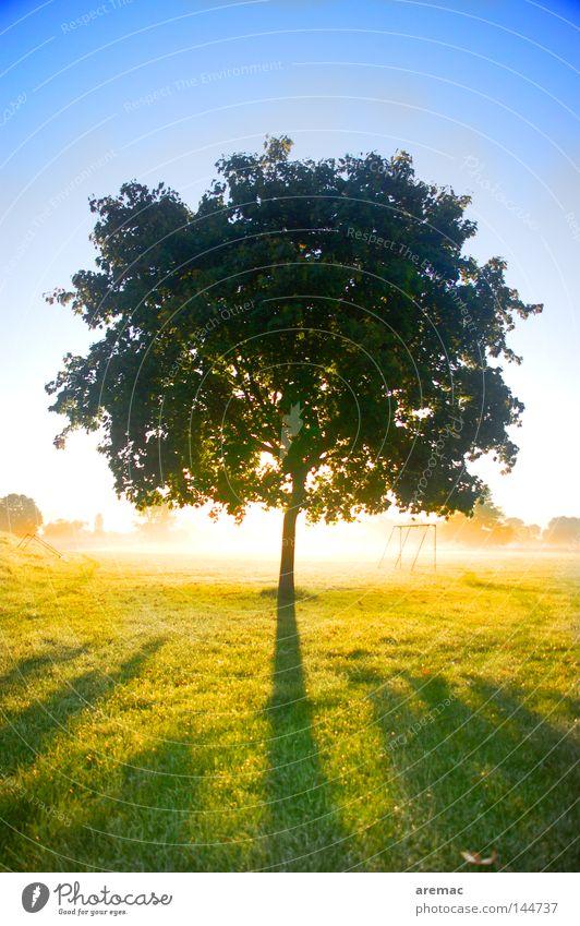 Gegenlicht Baum Sonne Herbst Wiese hell Gegenlicht Sonnenaufgang einzeln Himmelskörper & Weltall