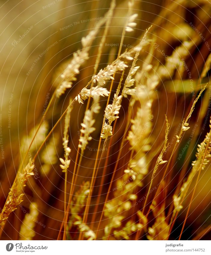Gras grün schön Pflanze Sommer Farbe Wiese Gras glänzend weich Frieden zart Weide Stengel Halm sanft beweglich