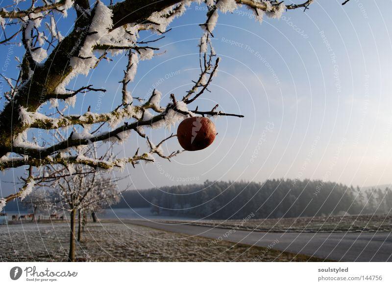 Winterapfel Baum Winter kalt Schnee Eis Frost Apfel gefroren reif Schneelandschaft vergessen Raureif Apfelbaum
