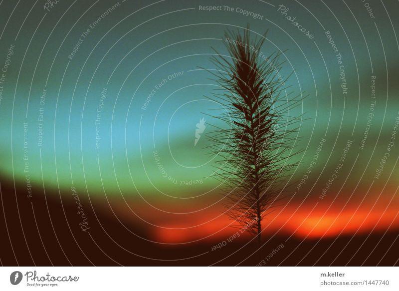 Romance Umwelt Natur Pflanze Sonnenaufgang Sonnenuntergang ästhetisch außergewöhnlich exotisch Gefühle Stimmung Vertrauen geduldig ruhig mehrfarbig