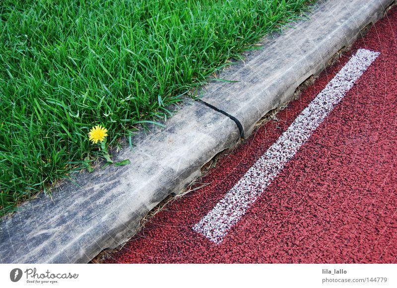 Laufeindruck Gras Rasen Sportrasen Pflanze Laufbahn Rennbahn Leichtathletik Linie Löwenzahn Blume Spielen Freizeit & Hobby Spielfeldbegrenzung quer diagonal