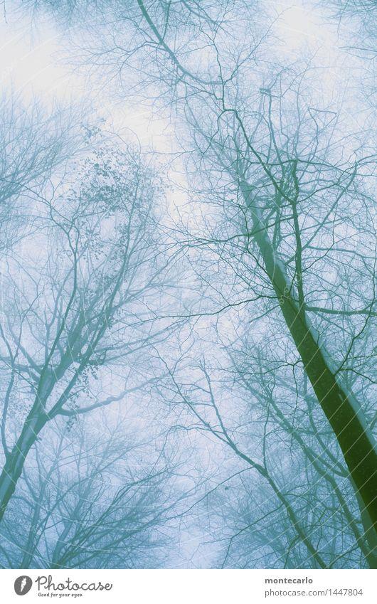 windig | und kalt Umwelt Natur Pflanze Urelemente Luft Himmel Wolkenloser Himmel Winter Klima Wetter schlechtes Wetter Wind Nebel Eis Frost Schnee Baum