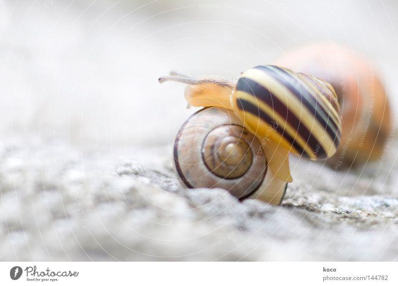 drunter und drüber Schnecke Schneckenhaus gelb Spirale aufwärts rund Kreis hell Hürde Tier