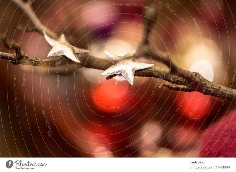 """"""" hamelig ... """" elegant Stil Design Weihnachten & Advent Zweige u. Äste Dekoration & Verzierung Lichtpunkt Lichterkette Weihnachtsdekoration Stern (Symbol)"""