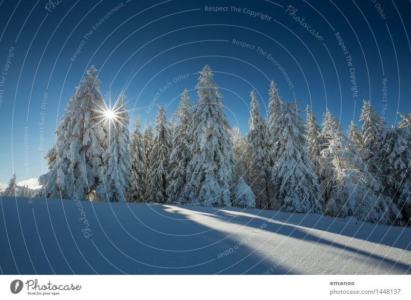 Sonne im Winterwald Himmel Natur Ferien & Urlaub & Reisen Pflanze blau weiß Baum Landschaft Wald kalt Berge u. Gebirge Schnee Wetter Tourismus Luft