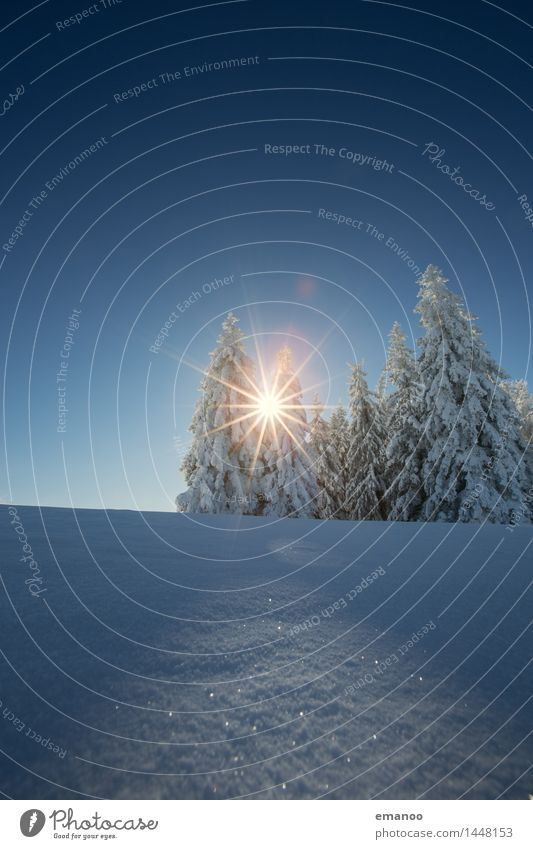 Winterwaldsonne Himmel Natur Ferien & Urlaub & Reisen blau Sonne Baum Landschaft Wald kalt Berge u. Gebirge Schnee Schneefall Tourismus Luft Eis