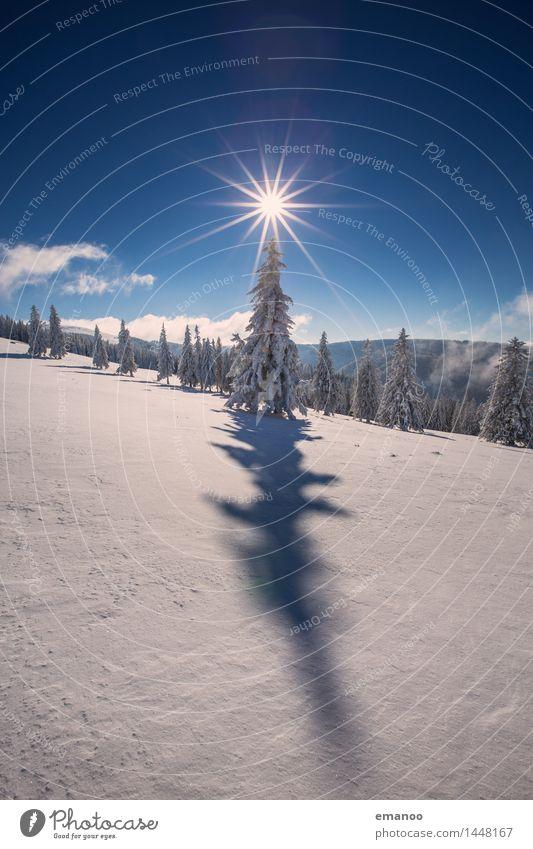 Sterntanne Himmel Natur Ferien & Urlaub & Reisen Weihnachten & Advent Sonne Baum Landschaft Winter Wald kalt Berge u. Gebirge Schnee Freiheit hell Luft Eis