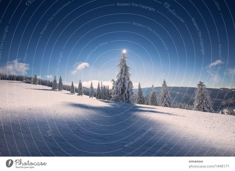 Tannen im Schnee Himmel Natur Ferien & Urlaub & Reisen Baum Landschaft Winter Wald kalt Berge u. Gebirge Freiheit Wetter Tourismus Luft Eis wandern