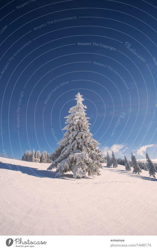 Weihnachtsbaum Himmel Natur Ferien & Urlaub & Reisen Baum Landschaft Winter Wald kalt Berge u. Gebirge Schnee Schneefall Wetter Eis Luft frisch wandern