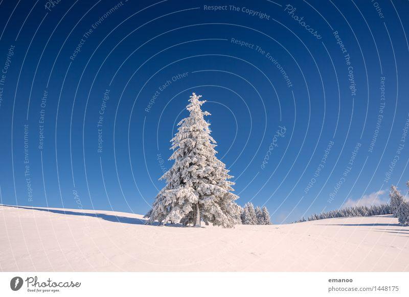 Wintertanne Himmel Natur Ferien & Urlaub & Reisen Pflanze blau weiß Baum Landschaft Wald kalt Berge u. Gebirge Schnee Freiheit Wetter Tourismus