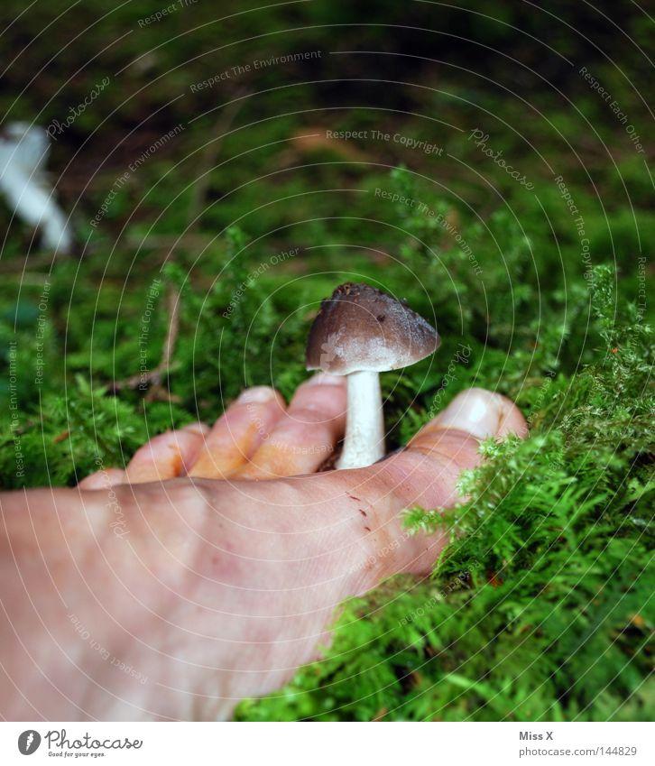 Fußpilz Farbfoto Außenaufnahme Herbst Moos dreckig grün weiß Zehen Pilz bleich Waldboden Suche Schlamm Barfuß