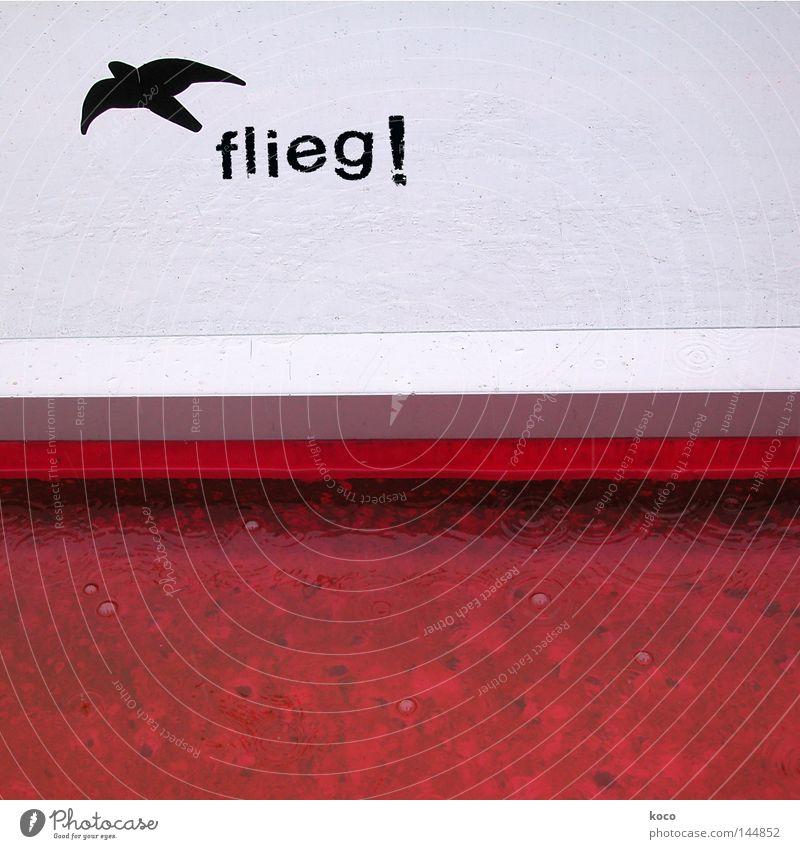 flieg! Vogel fliegen rot frei Schwalben Freiheit Himmel Schilder & Markierungen Freude befreien