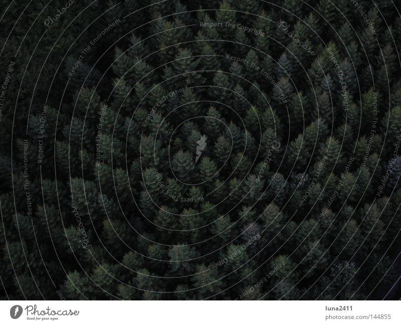 Kohl oder Wald ? grün dunkel oben Luft Spitze Tanne aufwärts Baumkrone Höhe Fichte