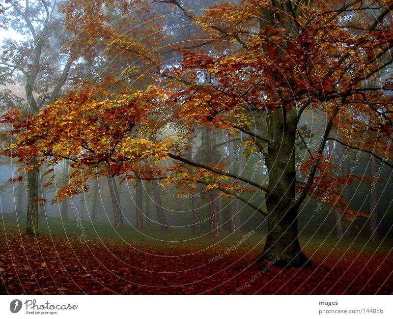 Herbstwald Baum ruhig Blatt gelb Wald braun orange Nebel gold Frieden feucht friedlich Morgennebel