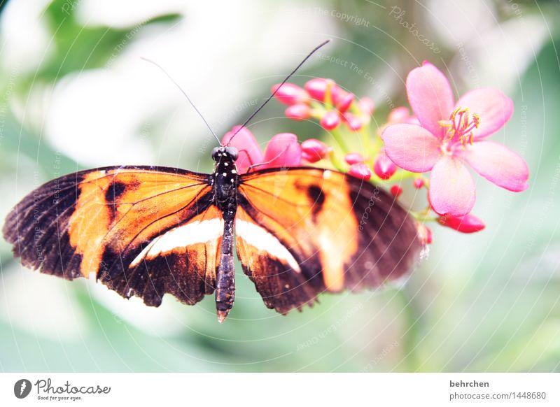 blume Natur Pflanze Tier Frühling Sommer Schönes Wetter Blume Blatt Blüte Garten Park Wiese Wildtier Schmetterling Flügel 1 beobachten Blühend Duft Erholung