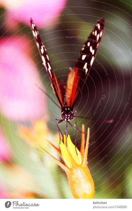 (blüten)staubsauger Natur Pflanze Tier Frühling Sommer Schönes Wetter Blume Blatt Blüte Garten Park Wiese Wildtier Schmetterling Tiergesicht Flügel 1 Blühend