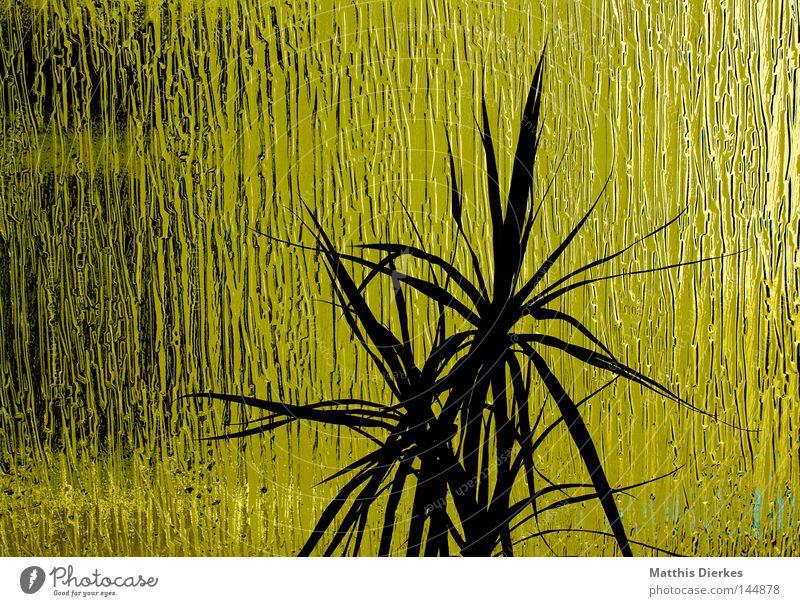 Green Light grün Licht Fenster Treppenhaus Fensterbrett Pflanze Topf Topfpflanze Silhouette Glas Verglasung Dekoration & Verzierung verschönern Gegenlicht