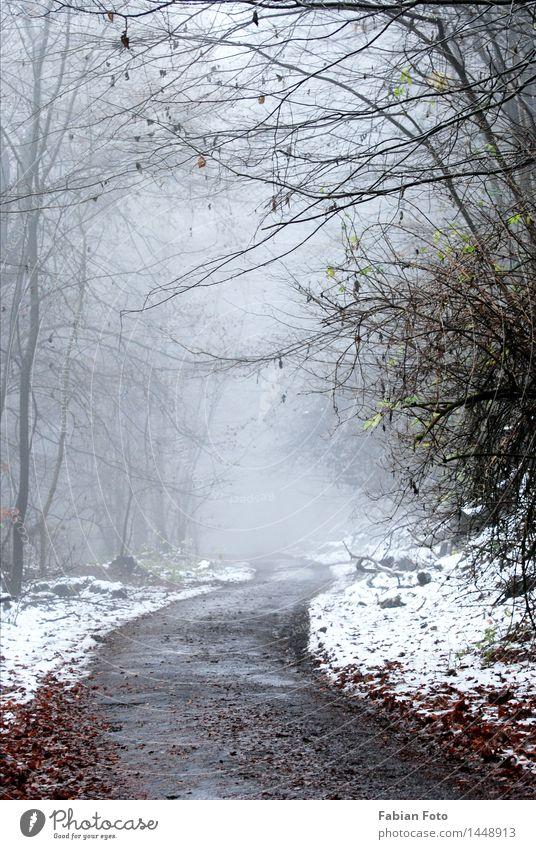 Anfang Dezember im Wald Wassertropfen Winter schlechtes Wetter Nebel Eis Frost Schnee Berge u. Gebirge frieren trösten Zukunftsangst Einsamkeit