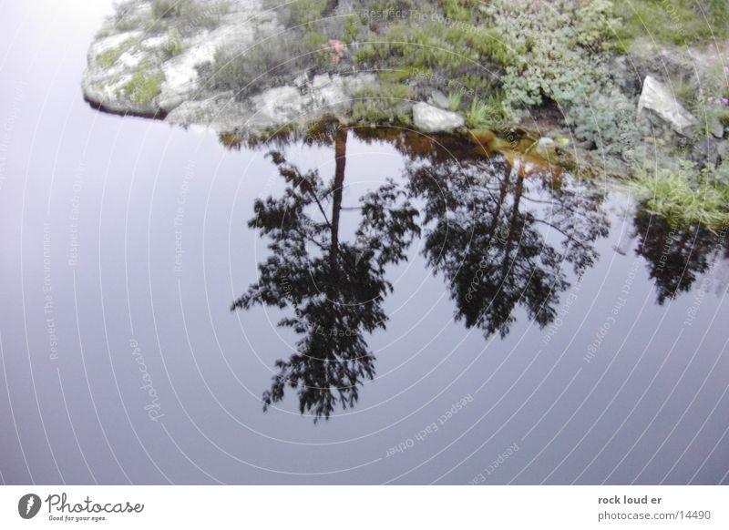Reflections of NorWay Wasser grün Baum ruhig Landschaft See Norwegen Selbstportrait besinnlich