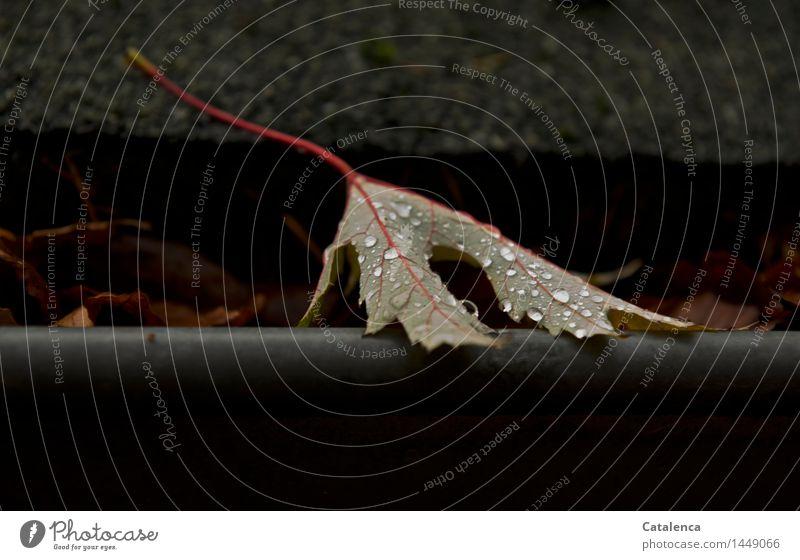 """Abschied Pflanze Wassertropfen Herbst schlechtes Wetter Regen Blatt Gartenhaus Dachrinne einfach glänzend braun gelb rot schwarz """"Vergänglichkeit Wechsel"""