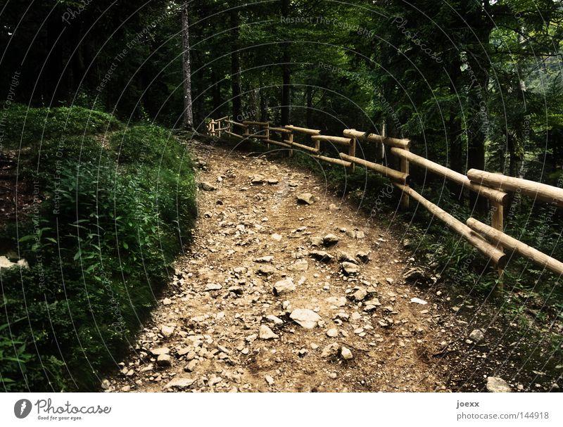 Nicht aufgeben aufwärts dunkel Feldberg Fußweg gehen Geländer holperig Holperstraße Holzzaun oben Stein steinig Treppengeländer unbequem vorwärts Wald wandern