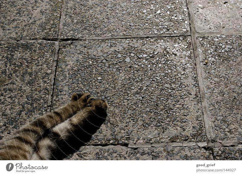 chillen Katze Pfote Fell Muster grau schwarz Krallen Bodenbelag Stein Reflexion & Spiegelung Schatten Plattenbau