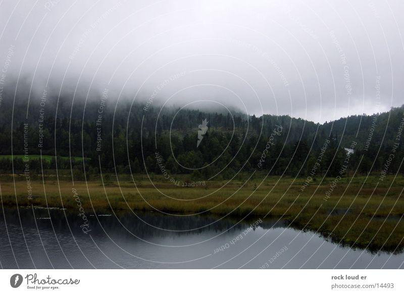 Nebel auf Norwegen Baum grün Wald dunkel Gras See feucht Moor