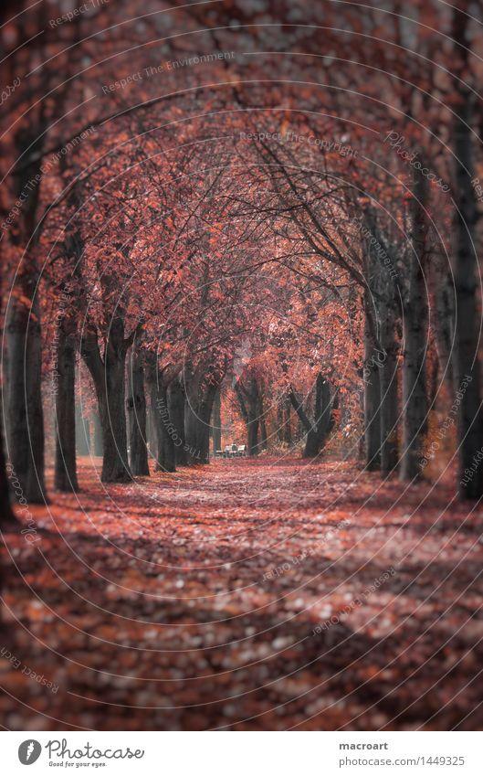 Herbst Natur Baum rot Blatt Wege & Pfade natürlich Jahreszeiten fallen Herbstlaub herbstlich Allee Kastanienbaum