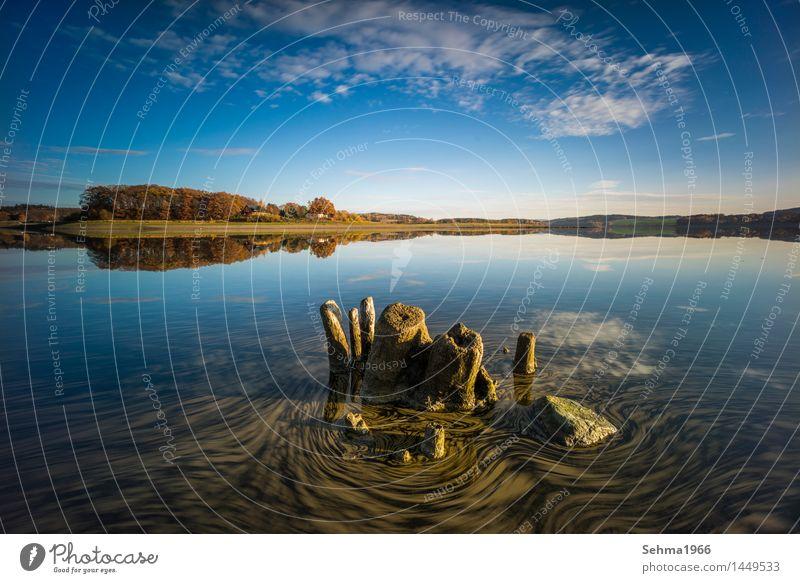 Herbstfarben und treibende Blätter am See Natur Landschaft Pflanze Wolken Sonne Sonnenlicht schlechtes Wetter Baum Gras Moos Seeufer Strand Teich Warmherzigkeit