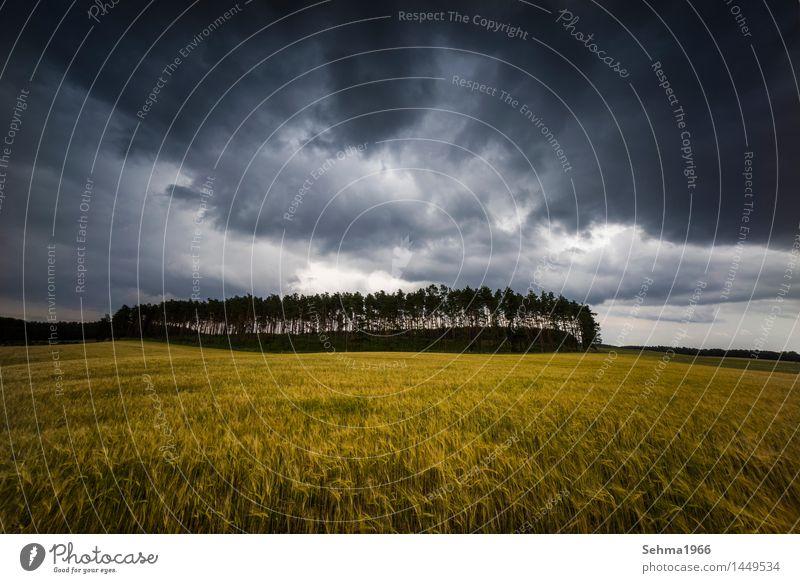 Gewitterwolken über einem Feld Natur Landschaft Pflanze Sommer schlechtes Wetter Sturm Regen Baum Sträucher Wiese Wald Romantik Angst Respekt Wut Aggression
