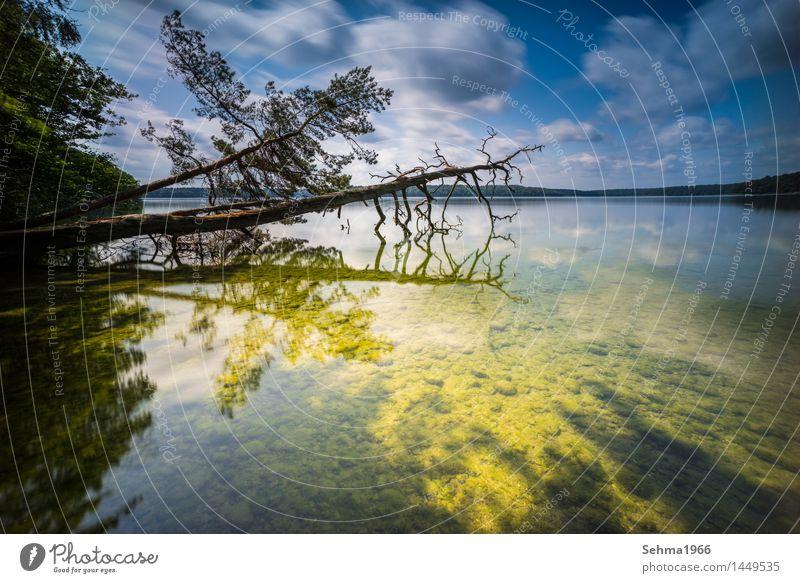 Sonnenbeschienener Strand mit toten Baum Umwelt Natur Landschaft Pflanze Sand Wasser Himmel Wolken Horizont Sommer Wetter Schönes Wetter Wärme Sträucher Moos