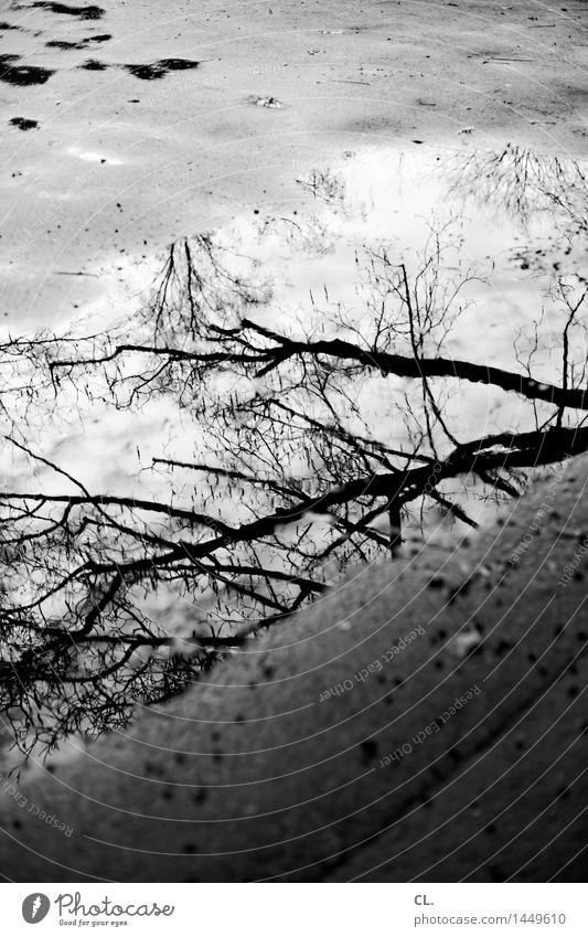 pfütze Umwelt Natur Wasser Herbst Winter Klima Wetter schlechtes Wetter Regen Baum Ast Boden nass trist Vergänglichkeit Pfütze Schwarzweißfoto Außenaufnahme