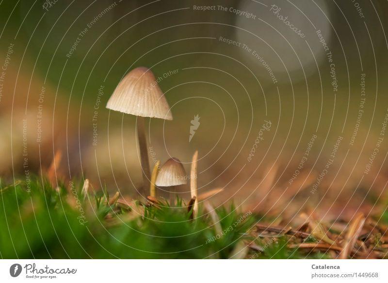 "Winzlinge 2 wandern Natur Herbst Moos ""Nadeln Pilze"" Wald ""Nadelwald Laubwald"" Wachstum nass braun gelb gold grau grün unbeständig ""zart filigran zerbrechlich"""
